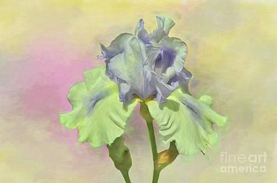 Iris Pastels Poster