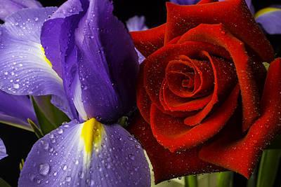 Iris Rose Poster