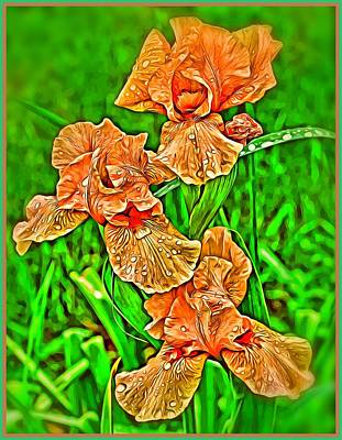 Iris Spring Poster by Mindy Newman