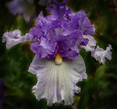 Poster featuring the photograph Iris Standout by Jean Noren