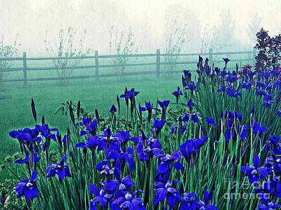 Irises At Dawn 3 Poster