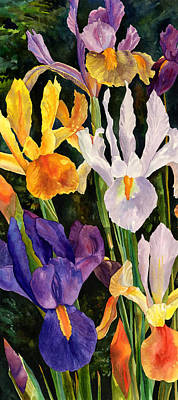 Irises In Bloom Poster by Anne Gifford
