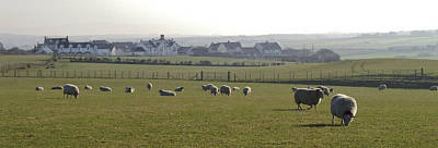 Irish Sheep Farm I Poster