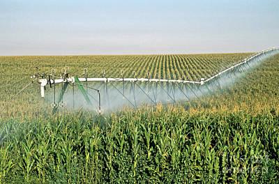 Irrigated Corn Crop Poster