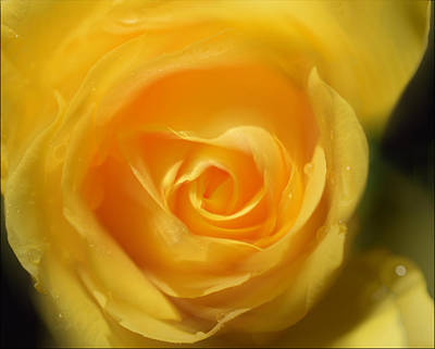 Poster featuring the photograph It Is At The Edge Of The Petal That Love Waits by Douglas MooreZart