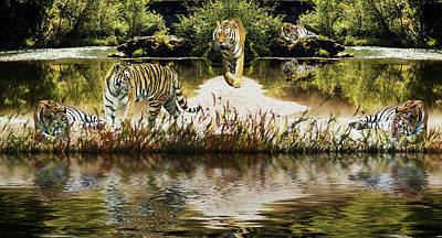 Poster featuring the photograph It Must Be Time For A Tiger Nap by Diane Schuster