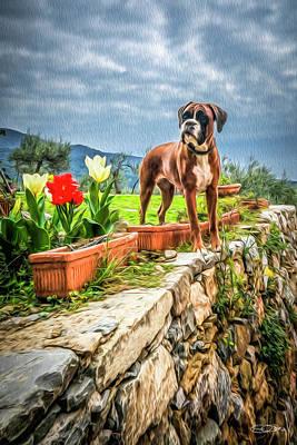 Italian Boxer In Cinque Terre Poster