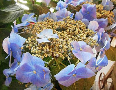 Italian Flower Market Hydrangea Poster