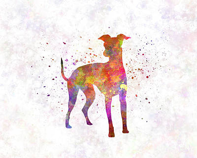 Italian Greyhound In Watercolor Poster by Pablo Romero