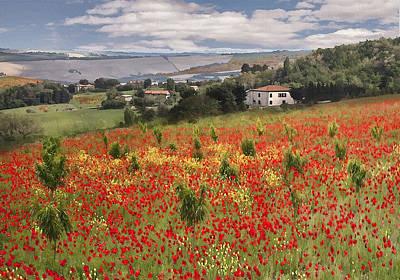 Italian Poppy Field Poster