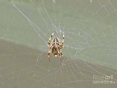 Itsy Bitsy Spider  Poster by Crystal Loppie