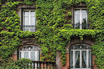 Ivy Covered House In Montmartre Paris Poster by Georgia Fowler