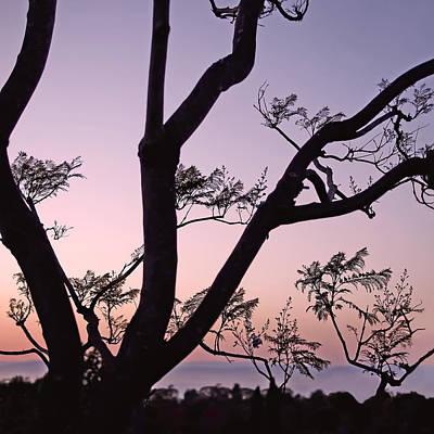 Jacaranda Silhouette Poster by Rona Black