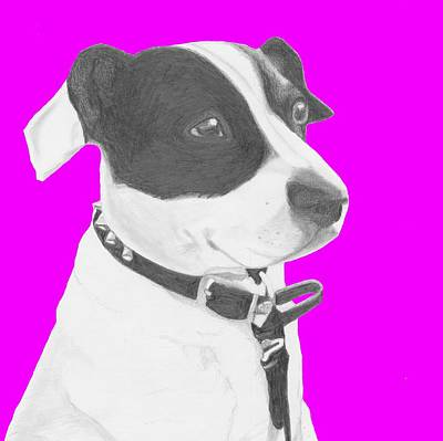 Jack Russell Crossbreed In Pink Headshot Poster