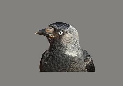 Jackdaw Corvus Monedula Bird Portrait Vector Poster