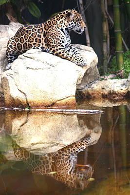 Jaguar At Rest Poster by Diane Merkle