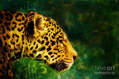 Jaguar In The Grass Poster