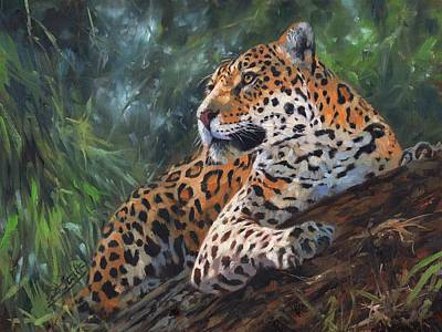 Jaguar In Tree Poster by David Stribbling