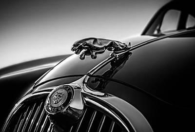 Jaguar Mascot Poster by Douglas Pittman