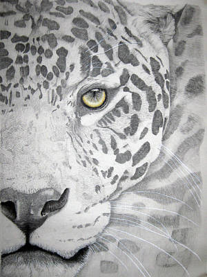Poster featuring the drawing Jaguar by Mayhem Mediums