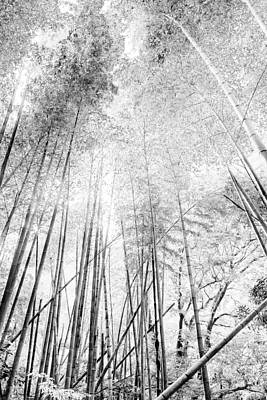 Poster featuring the photograph Japan Landscapes by Hayato Matsumoto