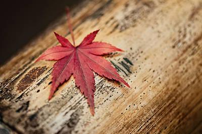 Japanese Autumn Poster by Ulrich Schade