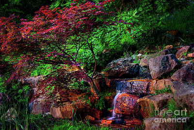 Japanese Maple At Honor Heights Park Poster by Tamyra Ayles