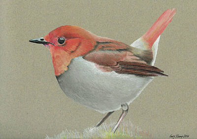 Poster featuring the drawing Japanese Robin by Gary Stamp