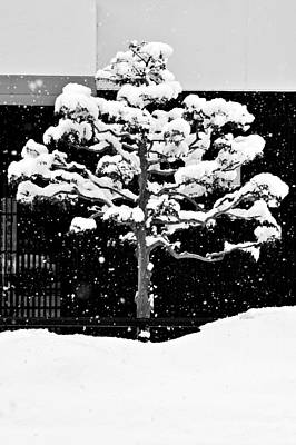Japanese Tree In The Snow Poster
