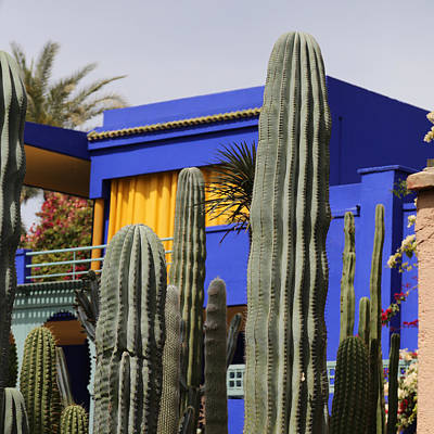 Poster featuring the photograph Jardin Majorelle 5 by Andrew Fare