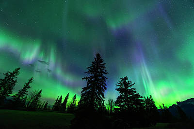 Poster featuring the photograph Jasper National Park Aurora by Dan Jurak