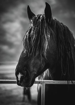 Poster featuring the photograph Jay The Rasta Horse by Debby Herold