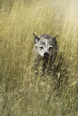 Jazzy In The Grasses Poster by Karen  W Meyer