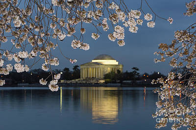 Jefferson Memorial And Cherry Blossoms I Poster by Clarence Holmes