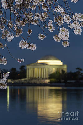 Jefferson Memorial And Cherry Blossoms II Poster by Clarence Holmes