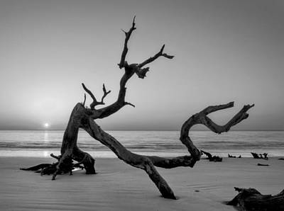 Jekyll Island Driftwood In Black And White Poster