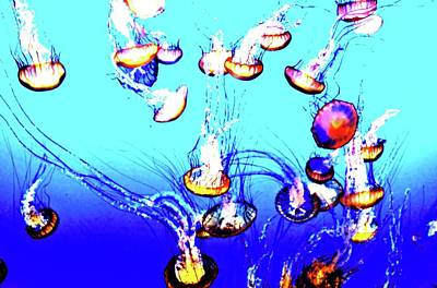 Poster featuring the photograph Jellyfish Dance IIII by Pacific Northwest Imagery