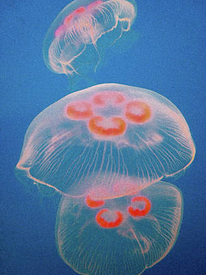 Jellyfish On Blue Poster by Sally Crossthwaite