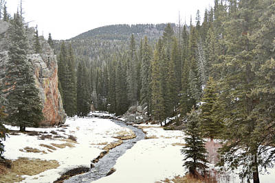 Poster featuring the photograph Jemez Mountains Forest Stream by Andrea Hazel Ihlefeld