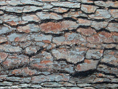 Jigsaw - Pine Tree Bark Poster