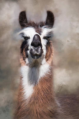Poster featuring the photograph Jolly Llama by Robin-Lee Vieira