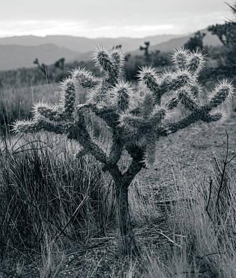 Joshua Tree Cactus Poster