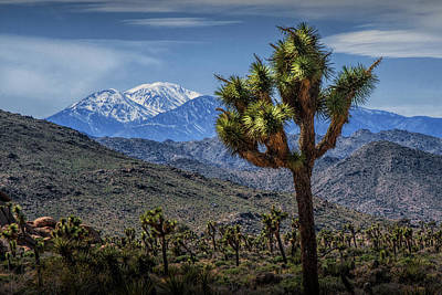 Poster featuring the photograph Joshua Tree In Joshua Park National Park With The Little San Bernardino Mountains In The Background by Randall Nyhof