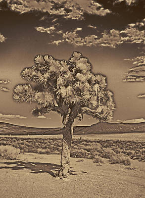 Joshua Tree Poster by Jim Cook