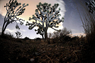 Joshua Tree One Poster by Mike Lindwasser Photography