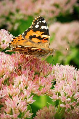 Joyful Butterfly Poster