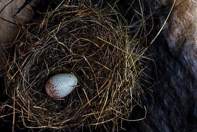 Junco Bird Nest And Egg Poster