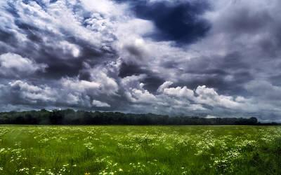 June Wildflowers Under Storm Poster