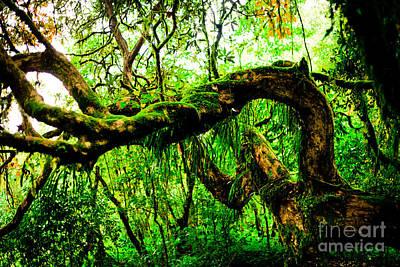 Jungle Forest Himalayas Mountain Nepal Poster by Raimond Klavins
