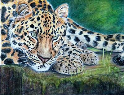 Jungle Gaze Poster by Kristen Chrapek